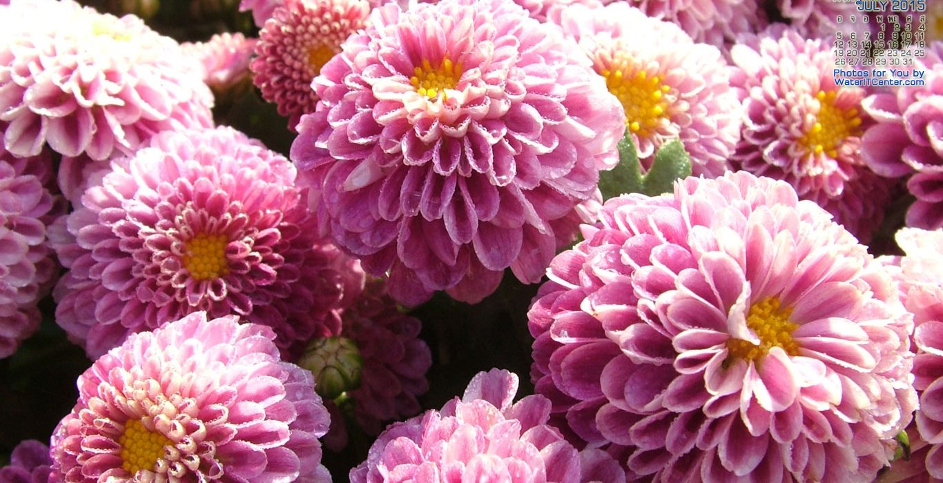 พวงหรีดดอกไม้สดประดับดอกเบญจมาศ