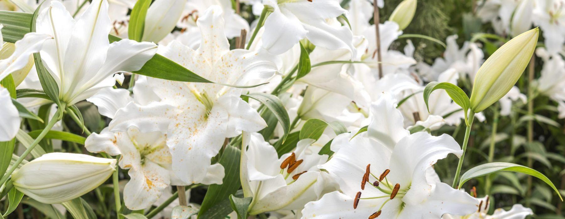 พวงหรีดดอกไม้สดยอดนิยมจากร้านผกาฟลอริส